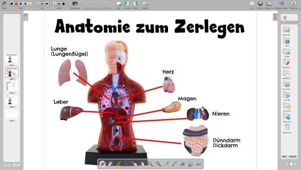 Anatomie Mensch Openboard Dokument